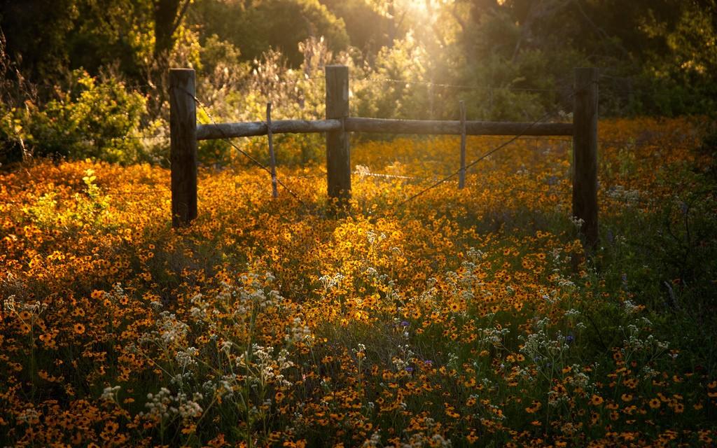 LadyBird Johnson Wildflower Center | © Anne Worner / Flickr