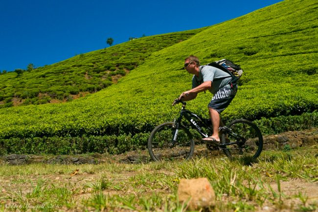 Cycling among tea estates