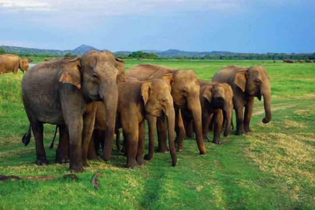 Elephants | © Amila Tennakoon/Flickr