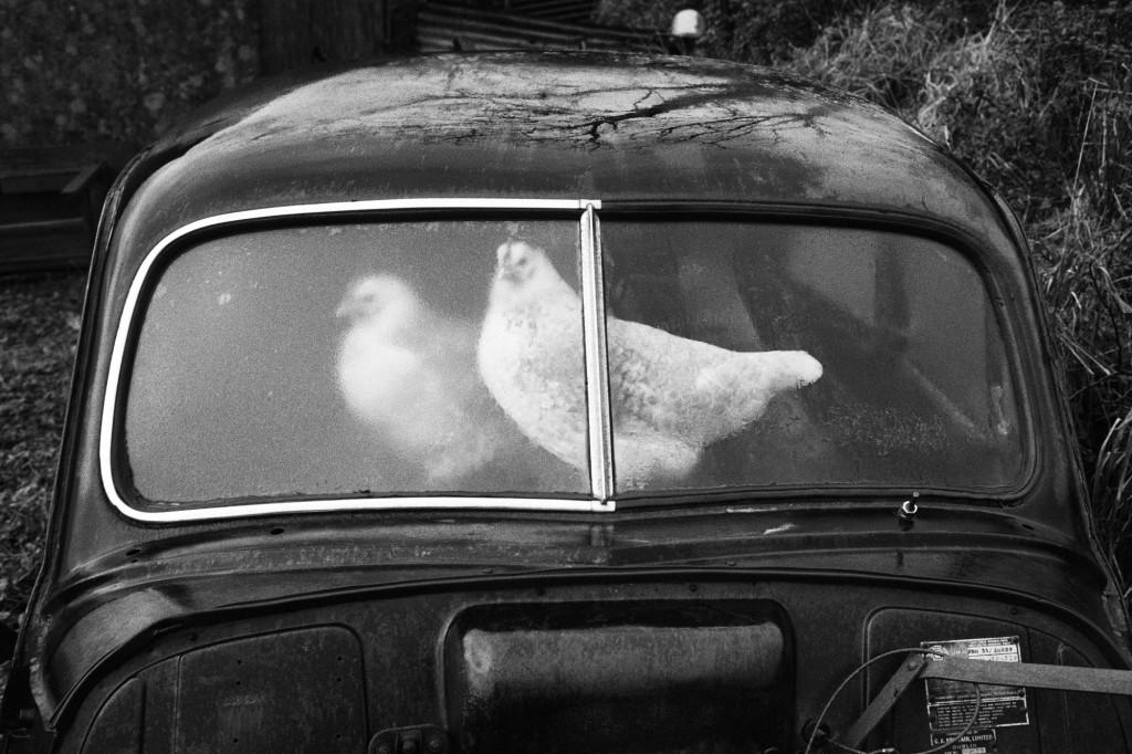 Martin Parr, Ireland, County Sligo, Glencar, Abandoned Morris Minors, from 'A Fair Day' series, 1980-1983 | © Martin Parr, Magnum Photos, Rocket Gallery