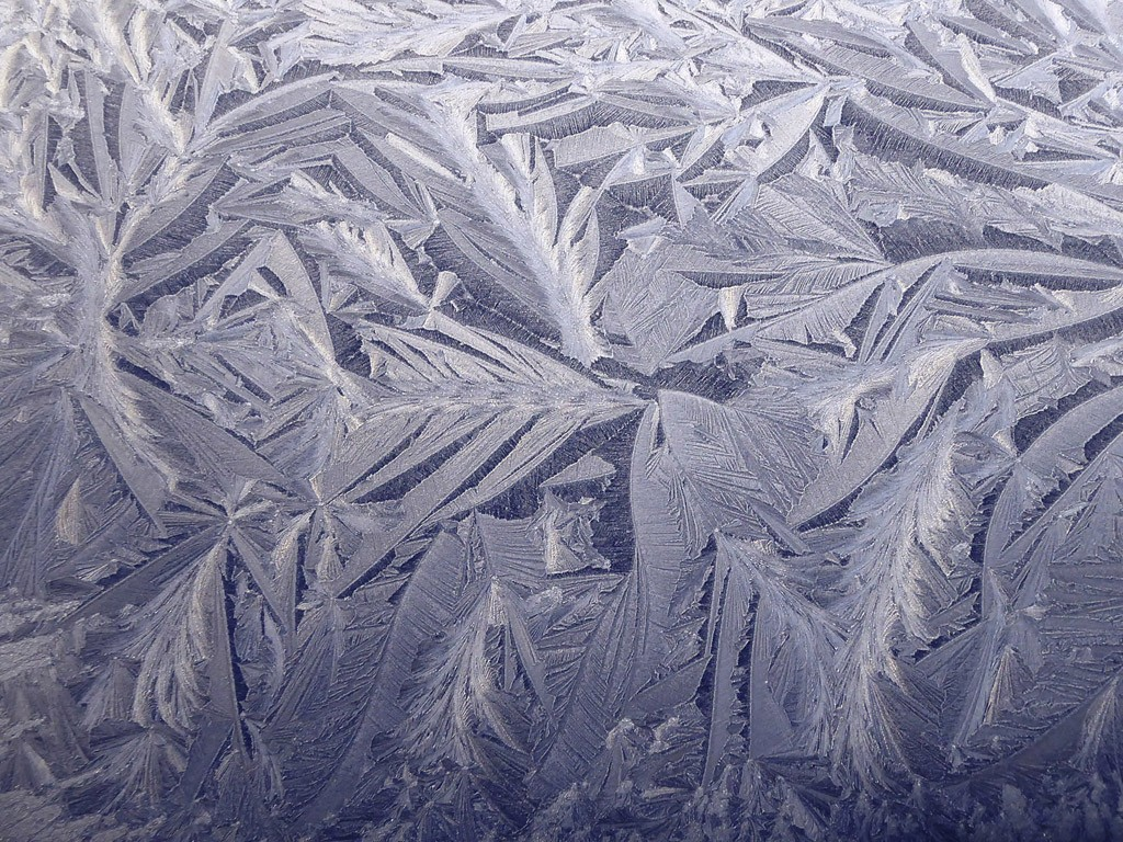 'Frost Feathers' | © Jeanette Stafford