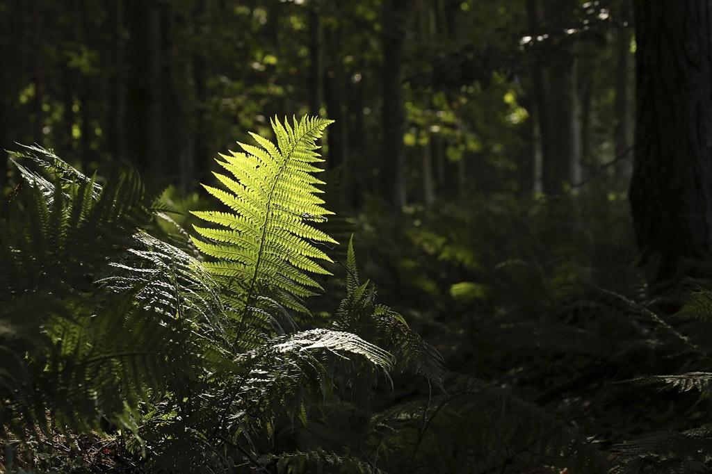 'Light Me Up', woodland near North Berwick | © Alan Johnstone