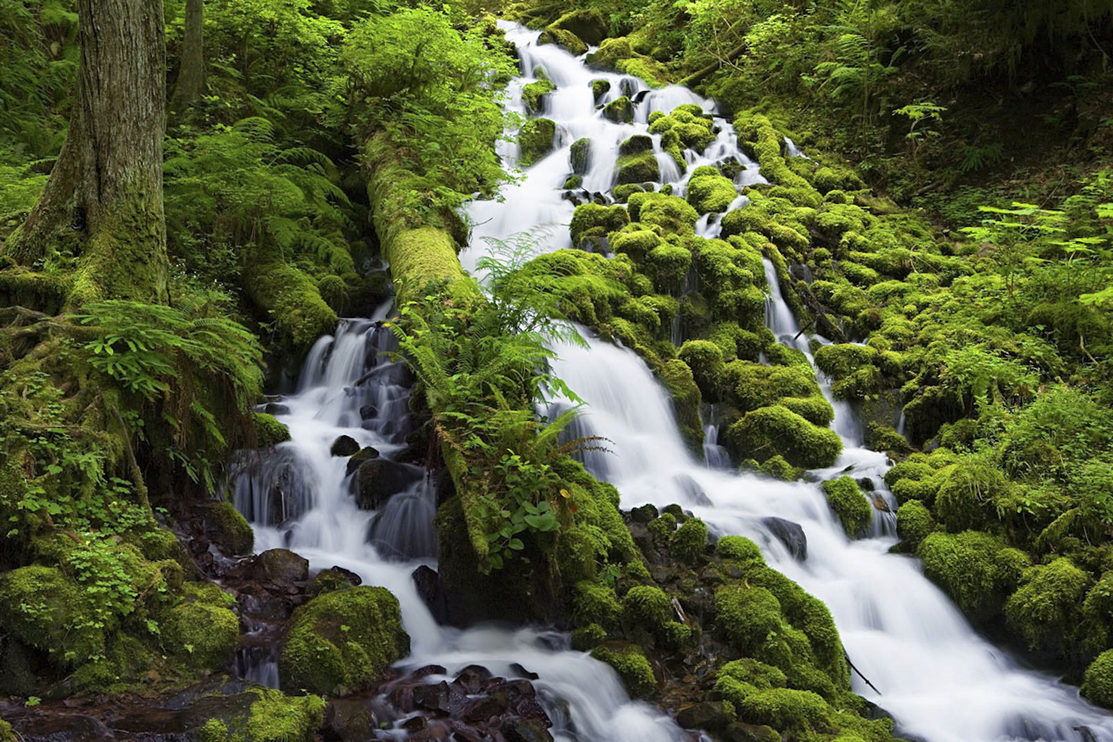 Wahkeena Creek-Columbia River Gorge | © Forest Service/Flickr