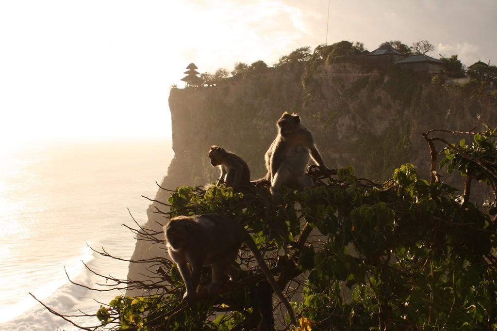 Monkeys enjoying the sun | © Remy Becher / Flickr