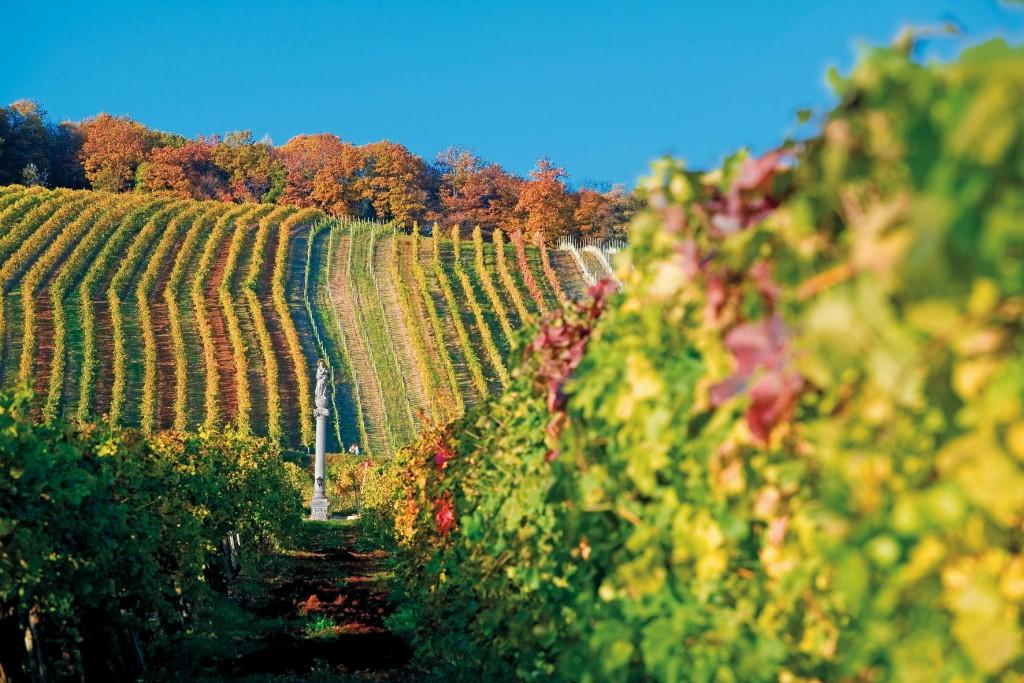 Vineyard in Vienna | © WienTourismus/Lois Lammerhube