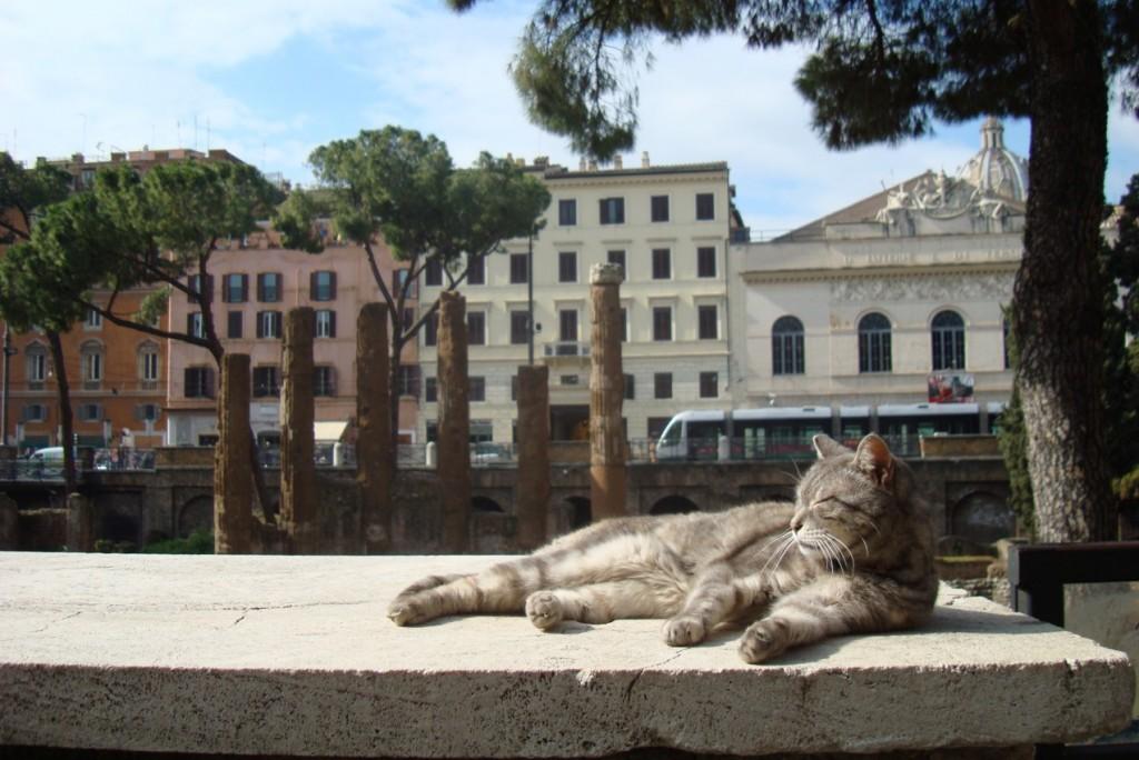 Cat at the sanctuary   © miriszlaibogi/Flickr https://www.flickr.com/photos/miriszlaibogi/3318708931/