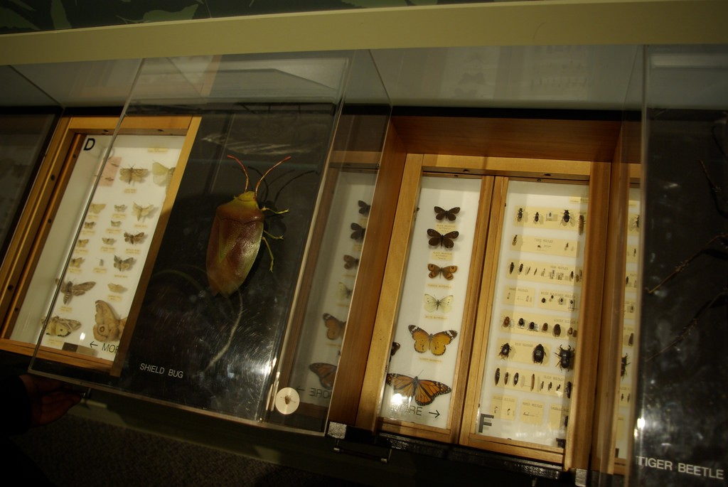 Otago Museum Nature Gallery | © Samuel Mann/Flickr