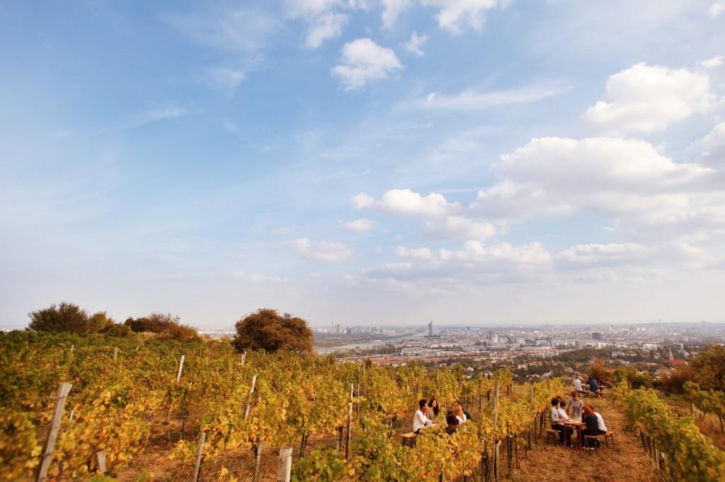 Wieninger vineyard on the Nussberg   © WienTourismus / Peter Rigaud
