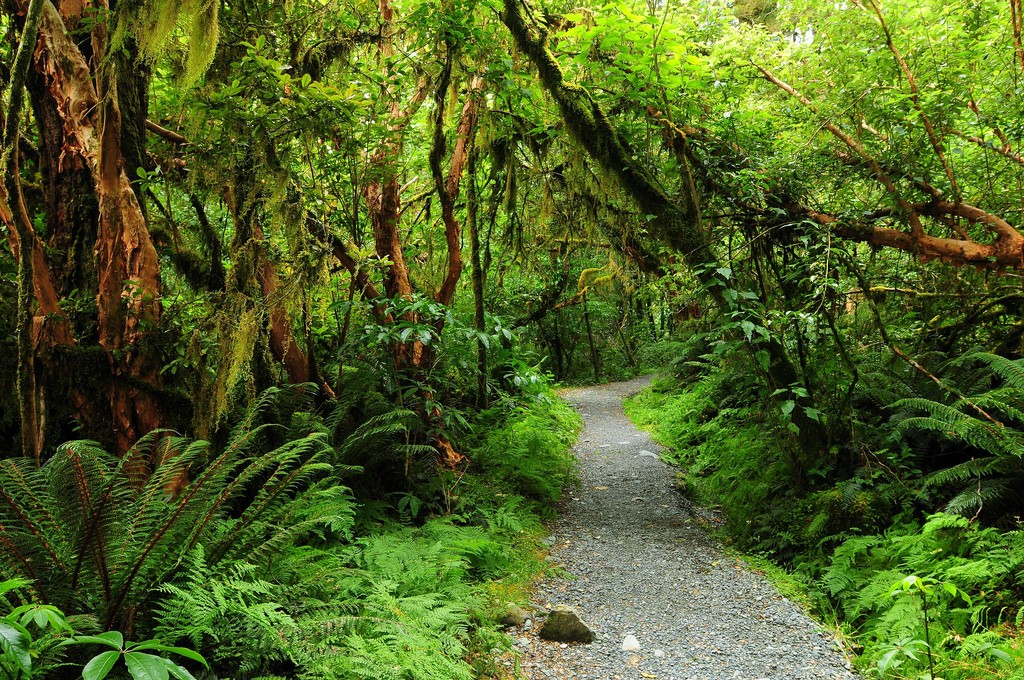 Routeburn Track | © lwtt93/Flickr