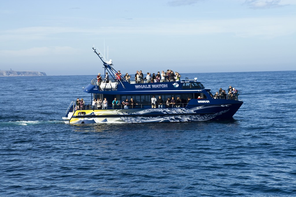 Kaikoura Whale Watching Tour | © Edward Nicholl/Flickr