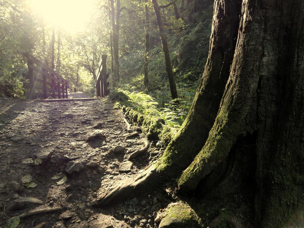 Forest Park - Portland, OR  © Mike Rohrig/Flickr