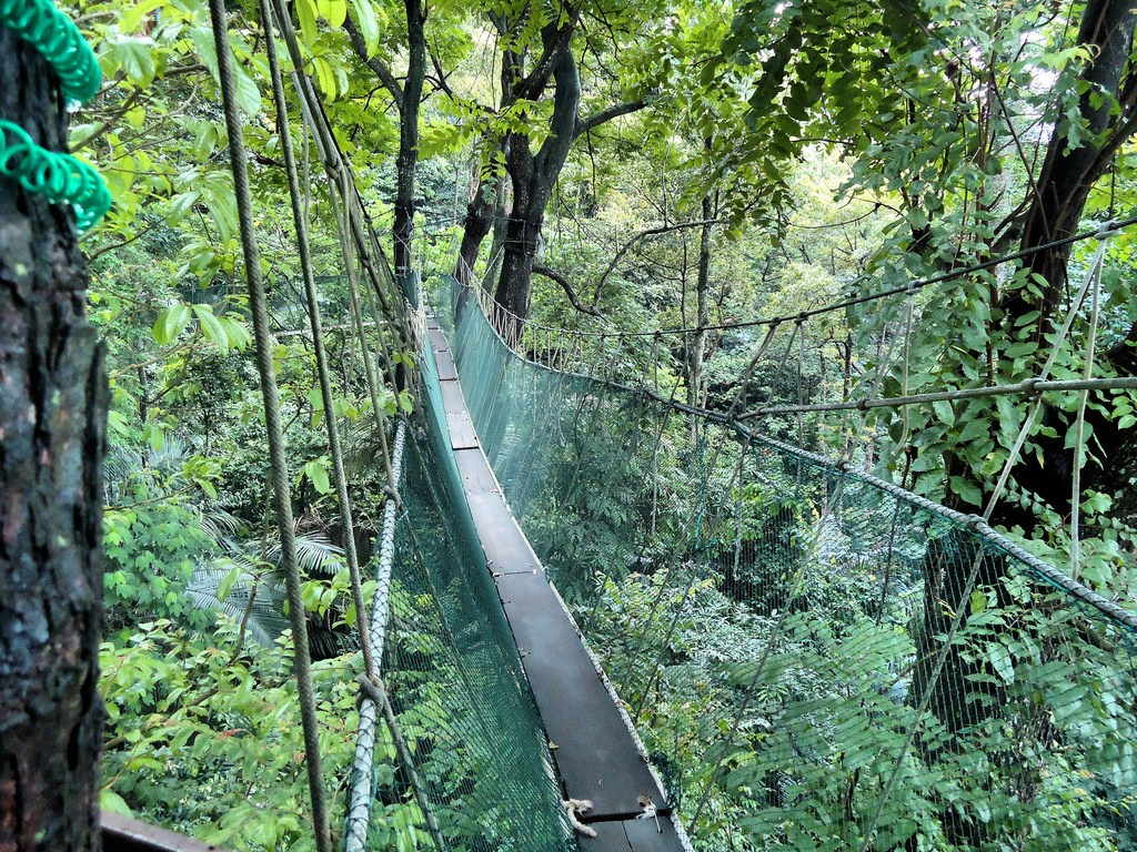 Canopy Walk at FRIM | (c)Nick Holland / Flickr