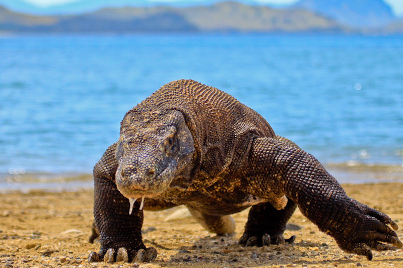 Why the Komodo National Park in Indonesia Is One of the World's Finest  Treasures
