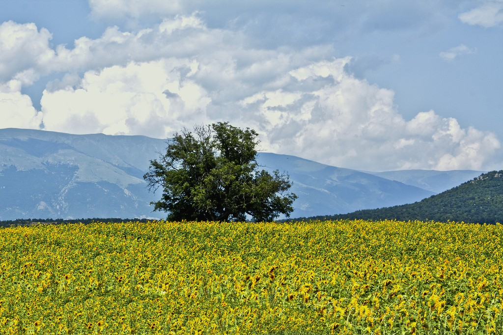 Prolom, Bulgaria | © Simeon Petrov/Flickr