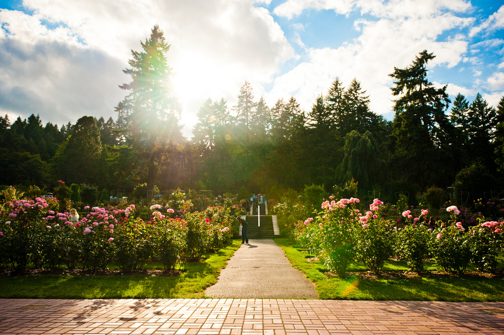 International Rose Test Garden   © star5112/Flickr