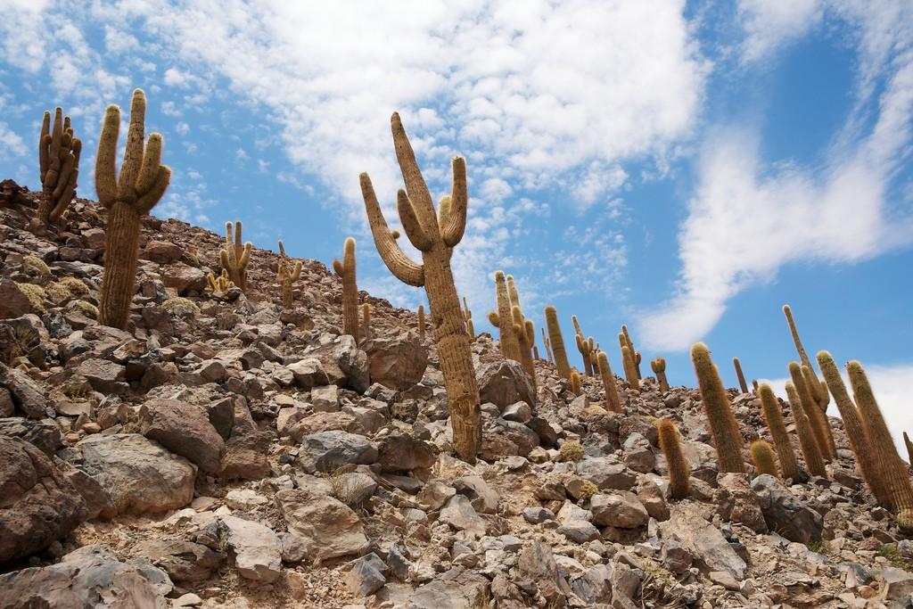 Bosque de Los Cactus © Nico Kaiser