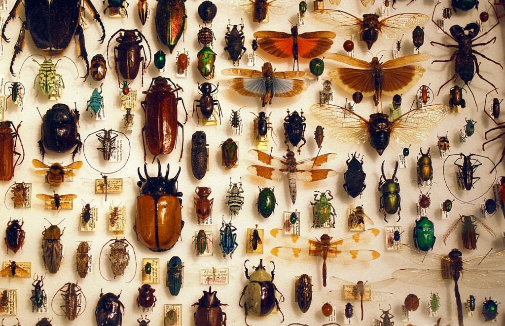 Insect collection   © Barta IV/Flickr