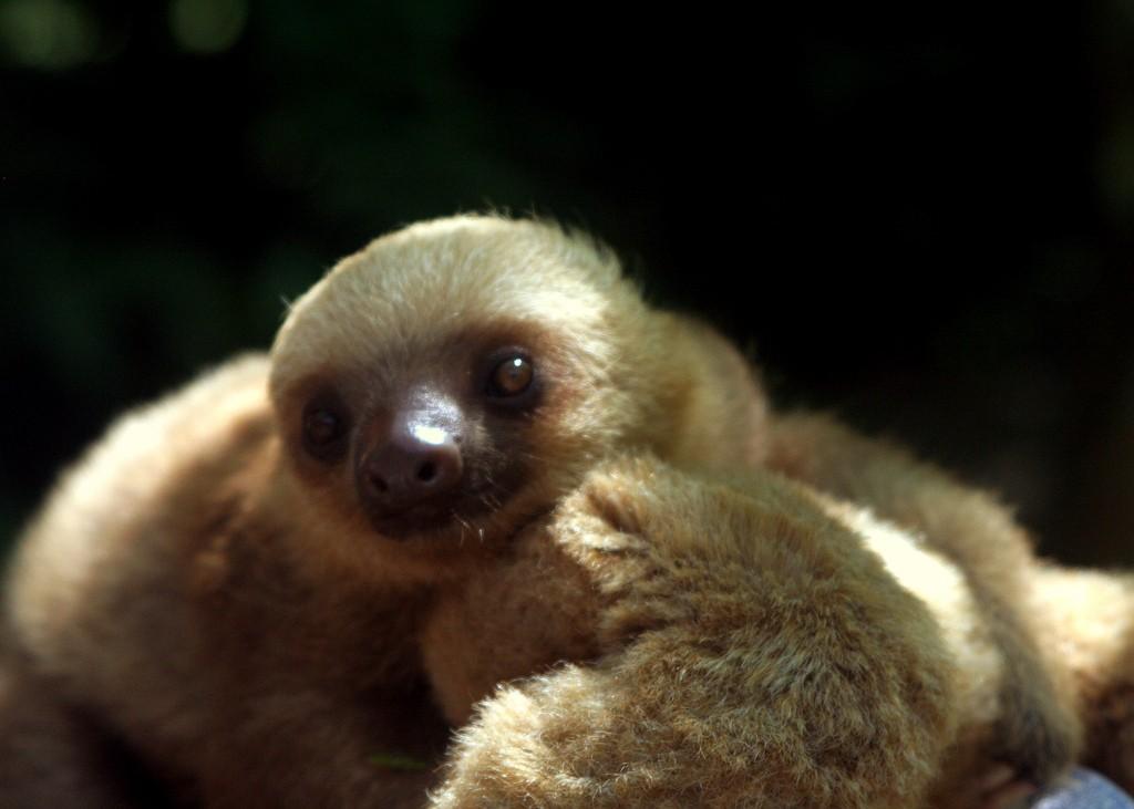 Cutest babies of all!  © David Gringrich/Flickr