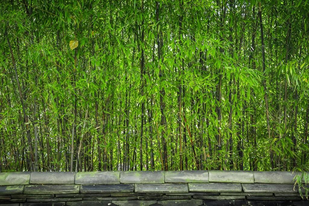 Damyang bamboo | © Jeon Sango / Pixabay