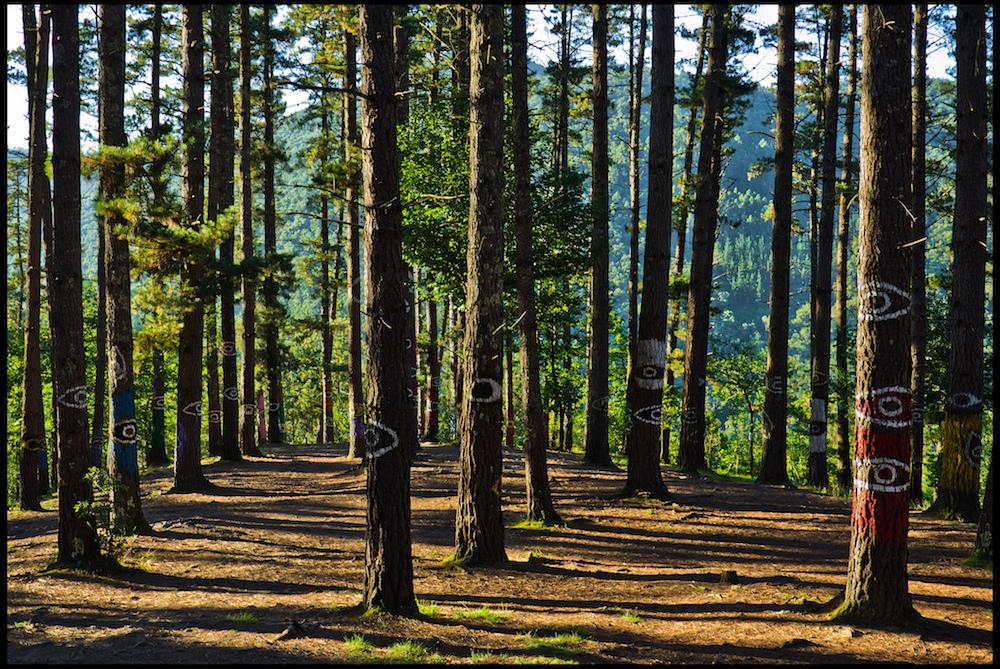 Bosque de Oma, Basque Country | ©Guillén Pérez / Flickr