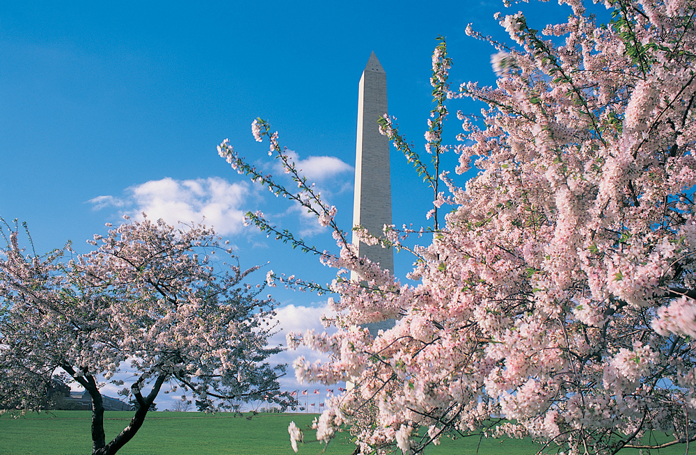 Cherry Blossoms and monuments are DC symbols Courtesy washington.org