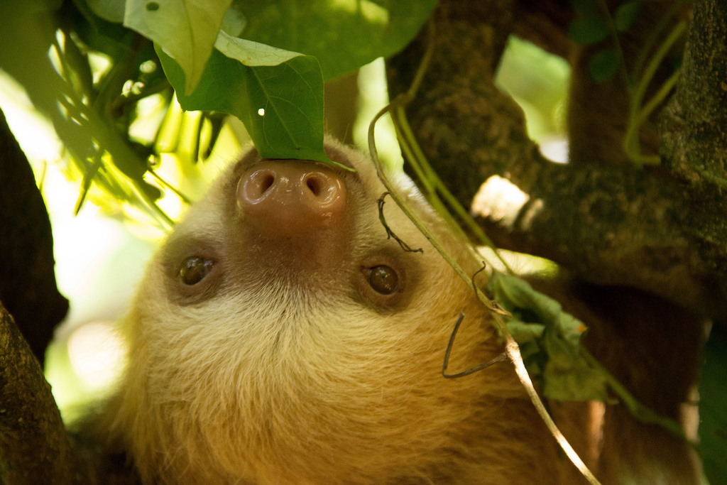 Guide to Costa Rica's Sloth Sanctuary