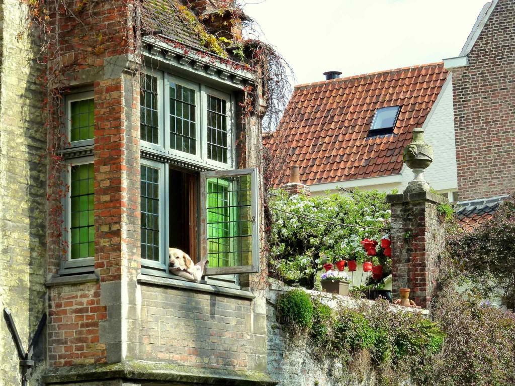 Golden lab Fidèle became a Bruges legend by lounging at his window spot above Bruges' Groenerei canal   © David van der Mark / Flickr
