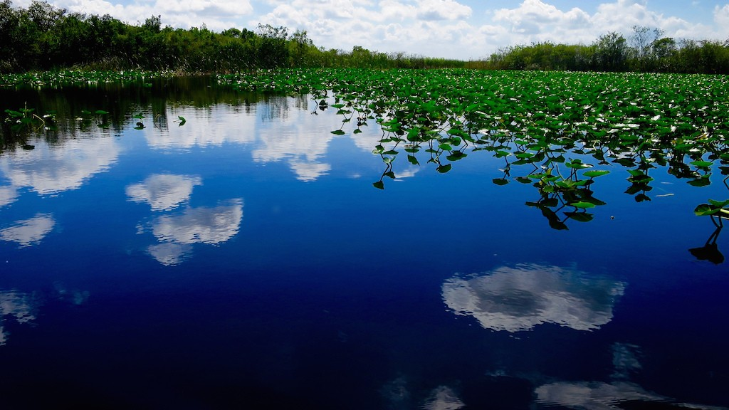 Florida Everglades|©Brian Crawford/Flickr