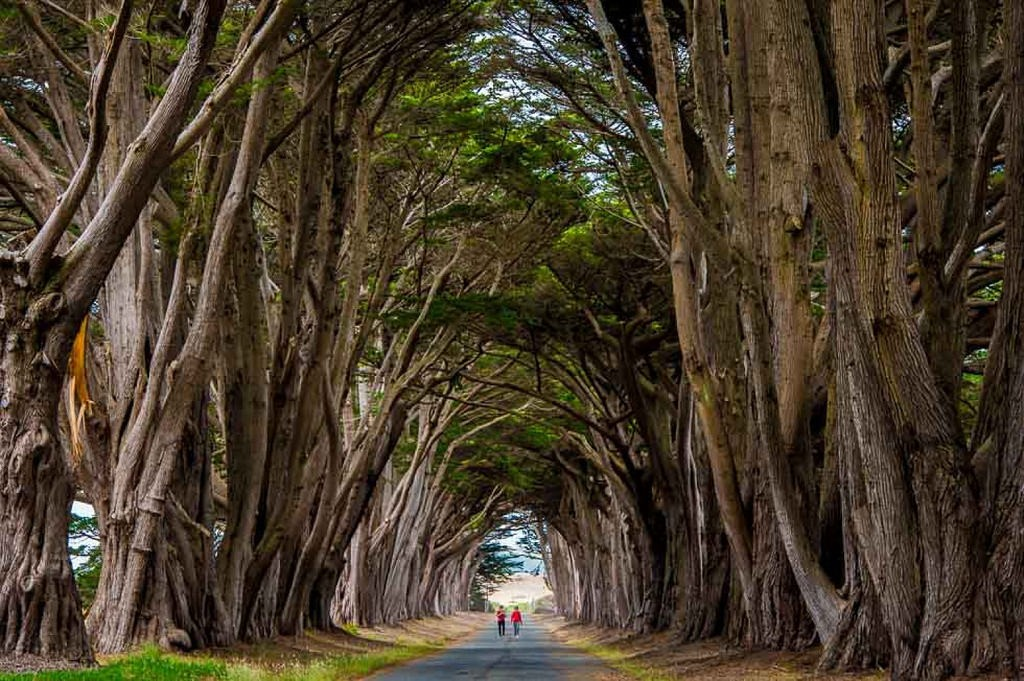 Cypress Tree Tunnel|©Ajay Goel/Flickr