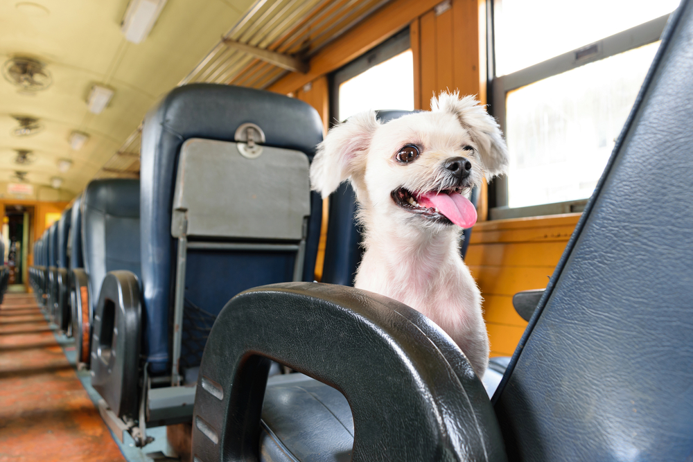 In Belgium, small dogs ride the railway for free while big hounds pay €2,50 extra   © PongMoji / Shutterstock