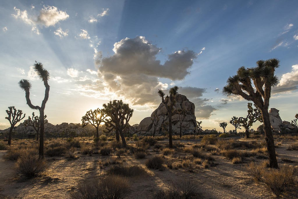 Joshua Tree|©Christopher Michael/Flickr