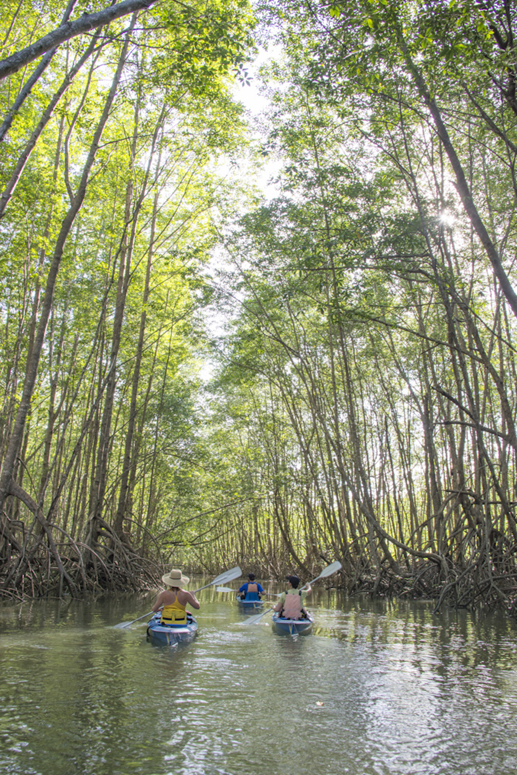 A tranquil tour of the mangrove forests | © James Anderson/Tartar Group