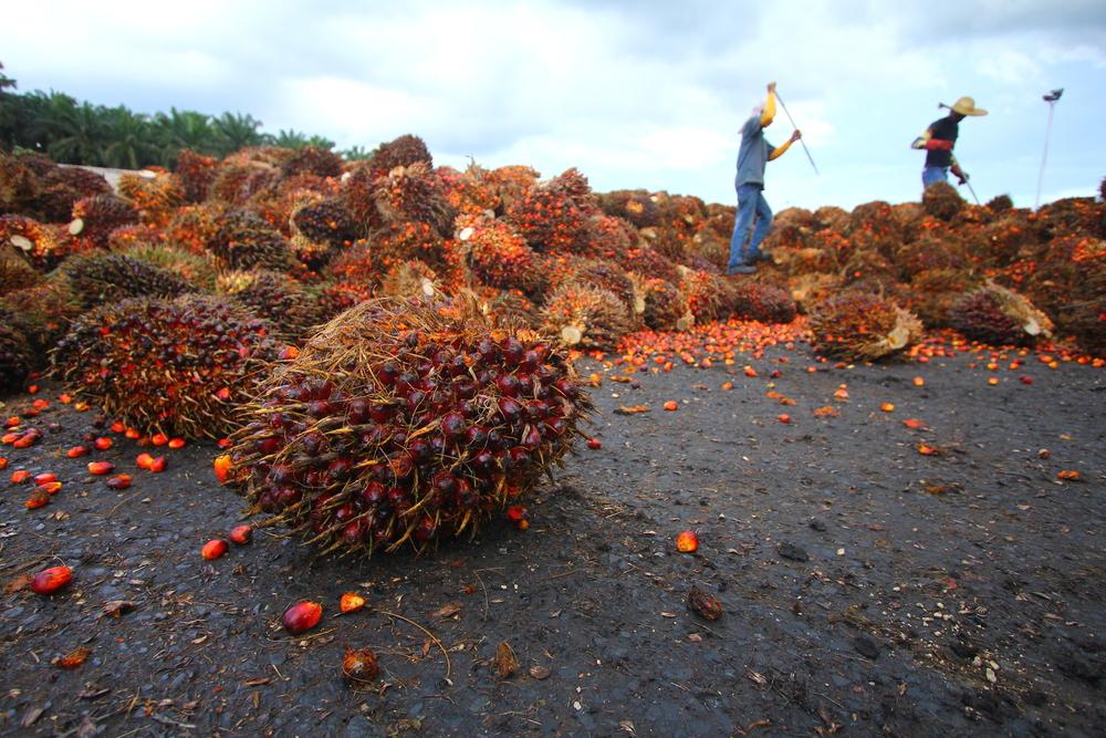 Palm Fruit| © Ky Tan/Shutterstock