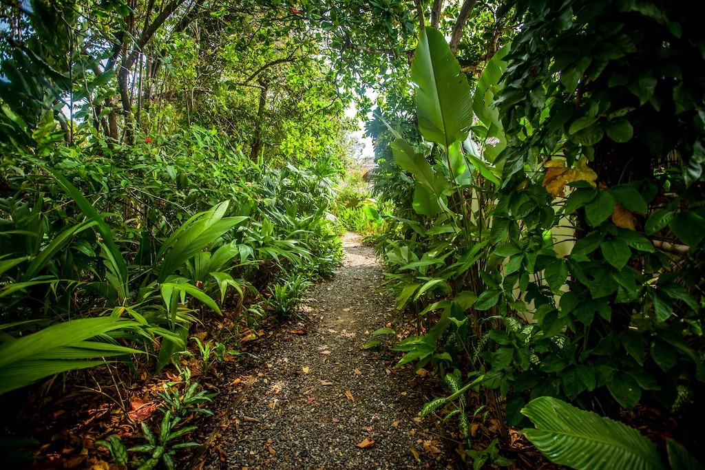 Pathway in paradise | © James Anderson/Tartan Group