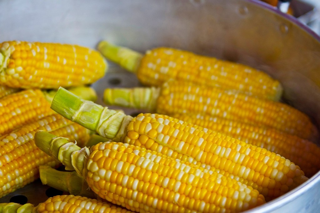 Corn   Pixabay