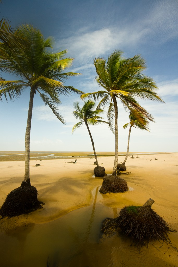 Ilha de Marajó / © Pedro Peron / Wikimedia Commons