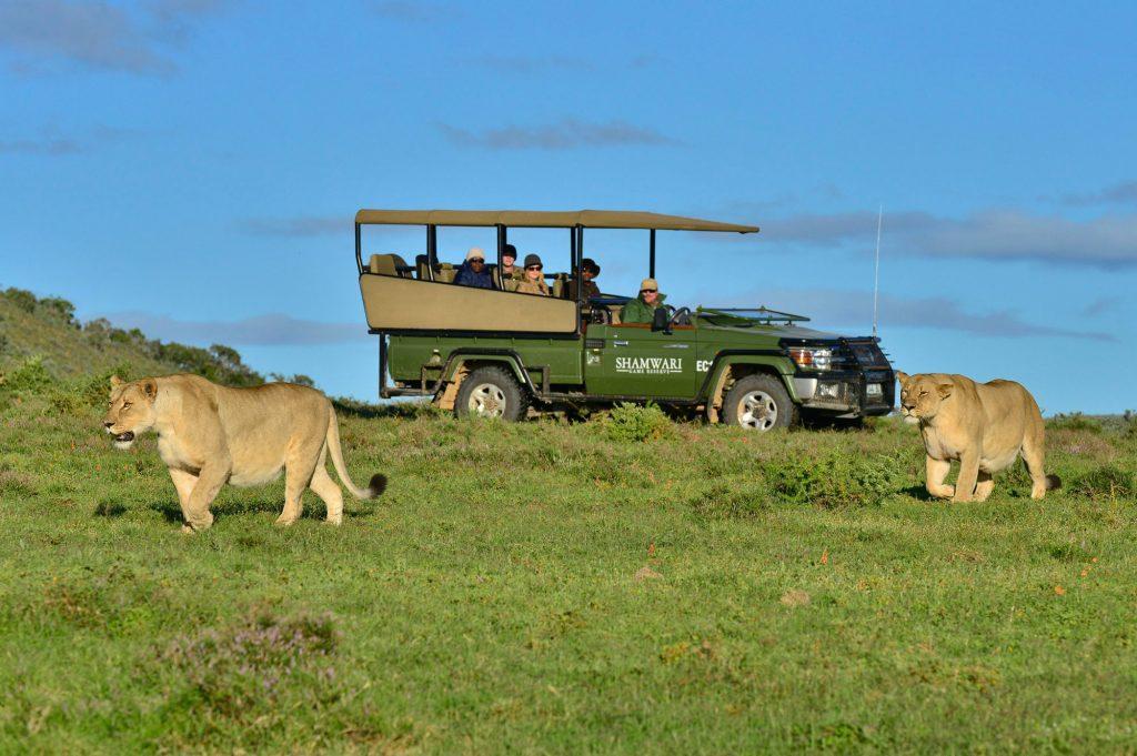 Safari at Shamwari