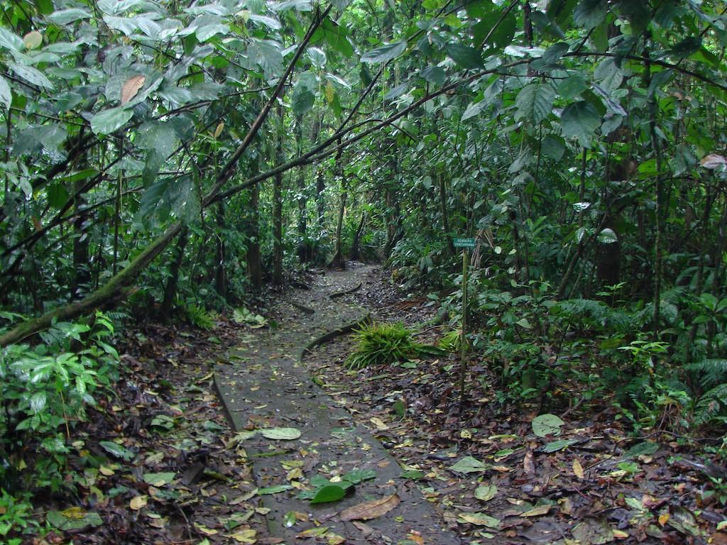 Head into the heart of the jungle |© Luiz Gadelha Jr./Flickr