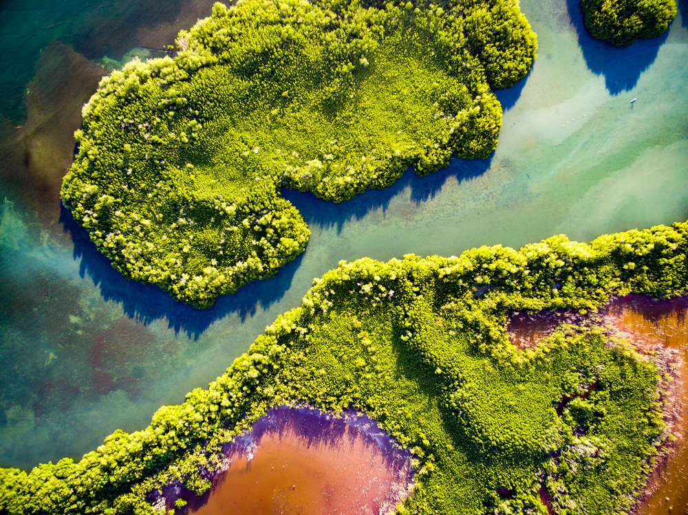 Drone shot of the mangroves in Puerto Rico | © AMontes/Shutterstock