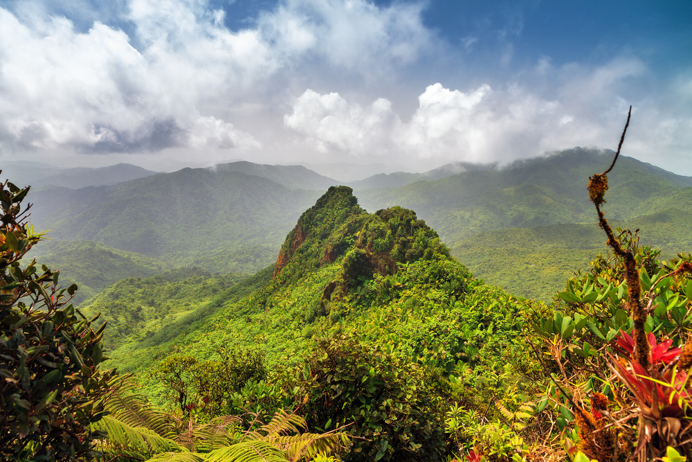 Beautiful panoramic view over the hills in the jungle of the El Yunque national forest in Puerto Rico| © Dennis van de Water/Shutterstock