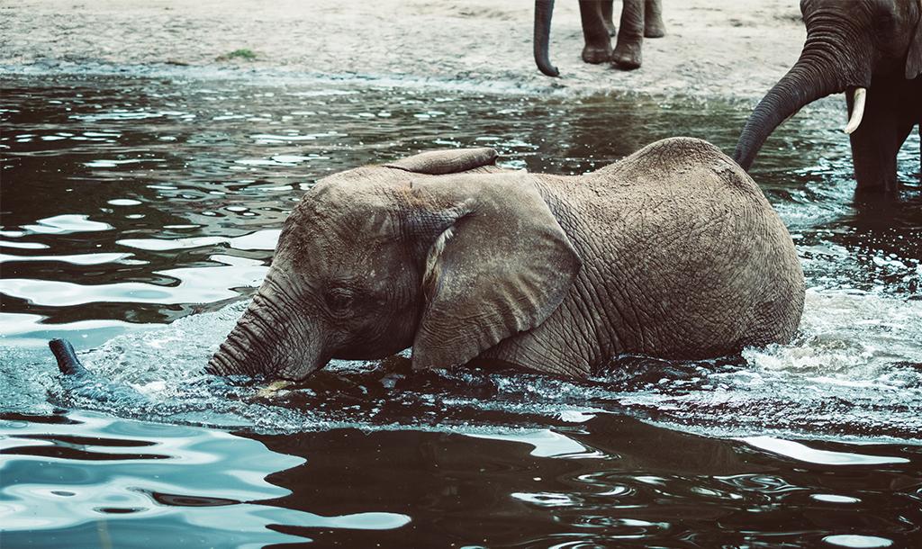 Baby elephant/ Simson Petrol/ Unsplash.com