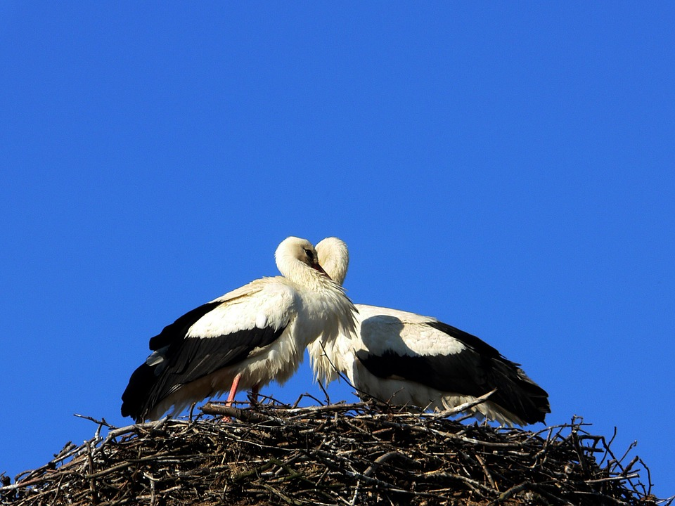 Child Symbol Baby Storks Birth Heart In Love