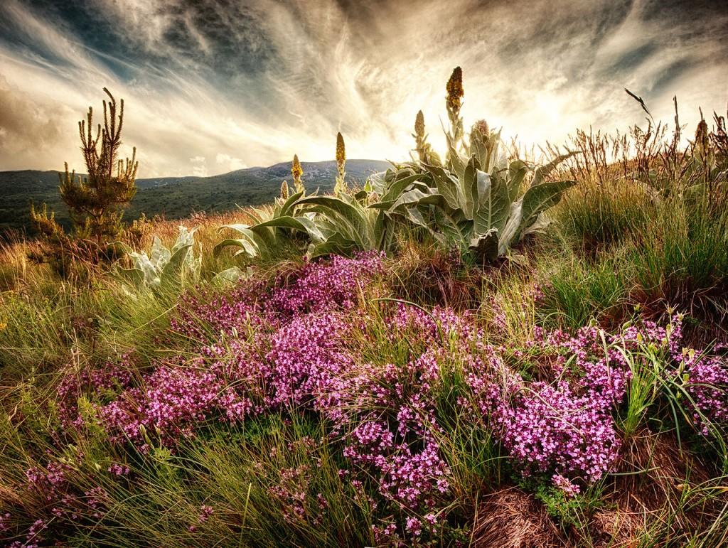 Vitosha Mountain near Sofia, Bulgaria | Ppopdi/WikiCommons