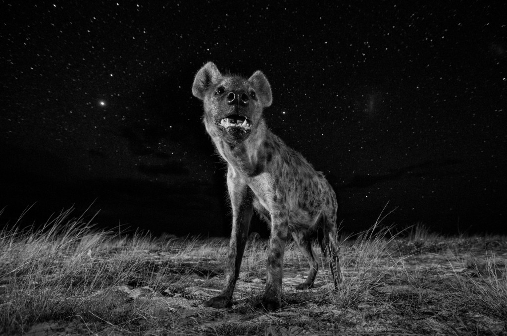 Will Burrard-Lucas, Spirit of the Night, 2017 | © Will Burrard-Lucas, United Kingdom, 1st Place, Professional, Natural World, 2017 Sony World Photography Awards
