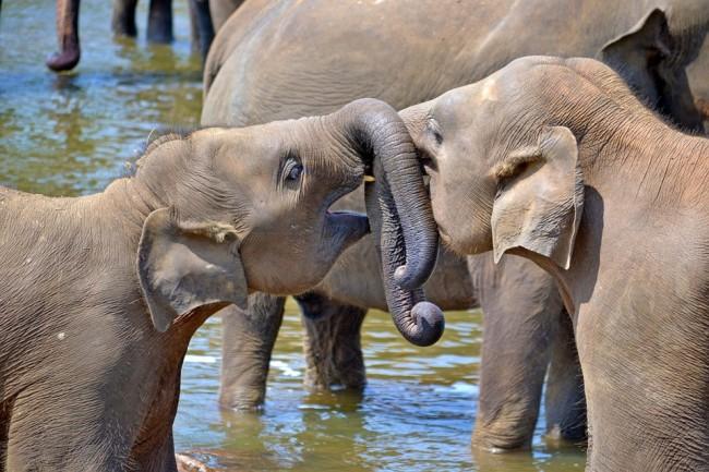 Elephants | © Nuzree/Pexels