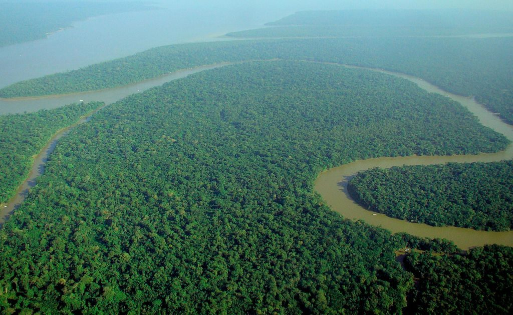 Amazon rainforest |©lubasi/WikiCommons