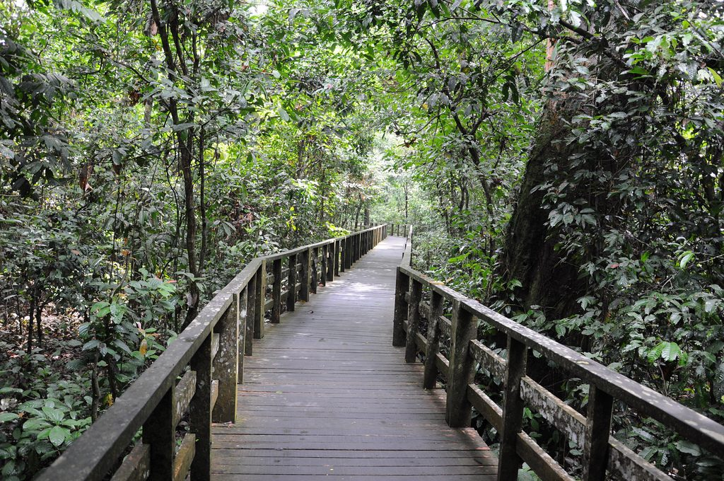 Boardwalk to the orang utan area | © shankar s. / Flickr