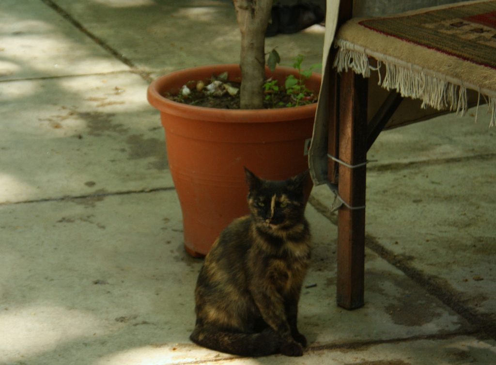 Iranian Artists' Forum is a haven for street cats | © Blondinrikard Fröberg / Flickr