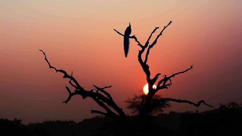 Yala National Park | © Kolitha de Silva / Flickr
