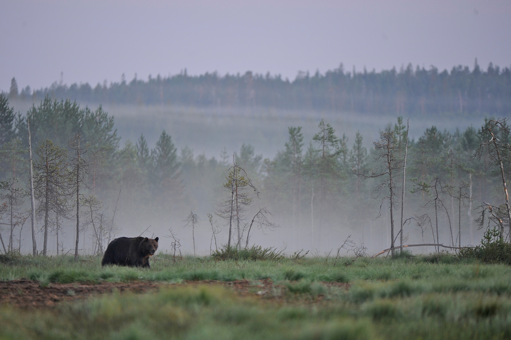 Not your usual Summer holiday in the Taiga of Finland © Joni-Pekka Luomala